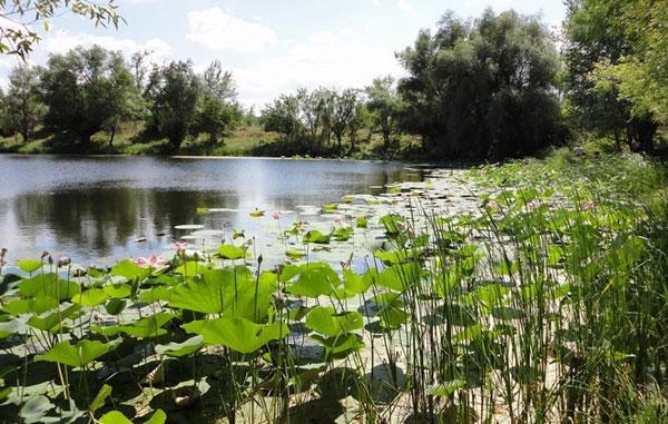 озеро_лотосов_ozero_lotosov
