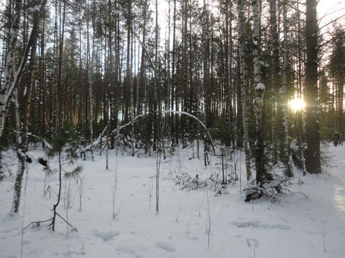 зимнее_солнце_zimnee_solntse