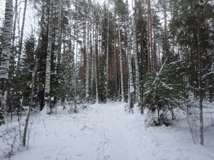 зимний_лес_zimnij_les