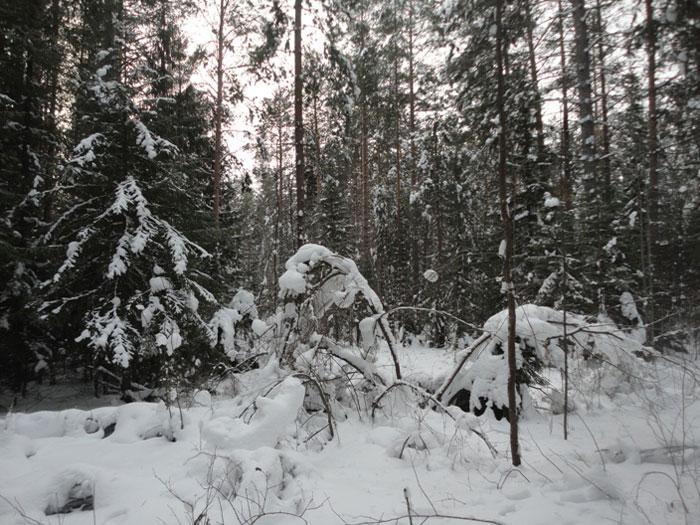 снег_sneg