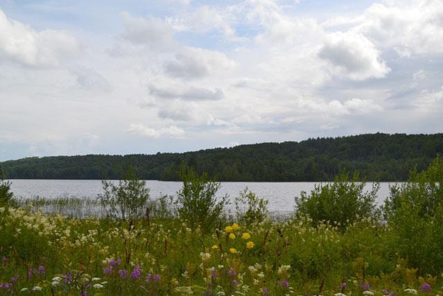 цветы_у_озера_tsvety_u_ozera