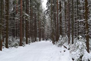 лыжня_в_лесу_lyzhnya_v_lesu