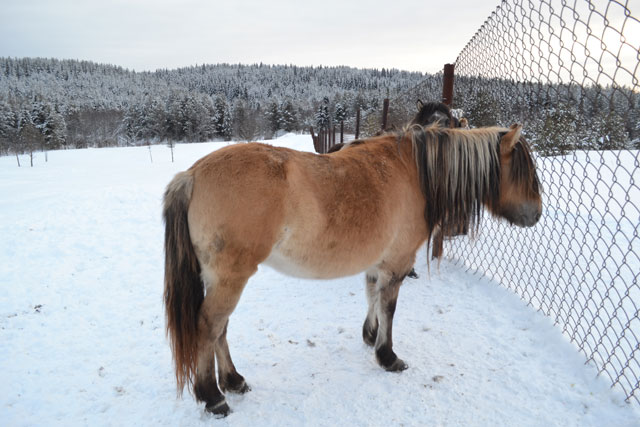 лошади_loshadi