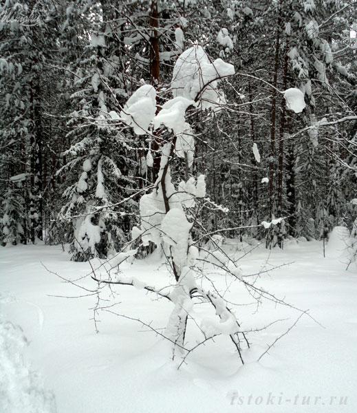 снежная_красавица_snezhnaya_krasavitsa