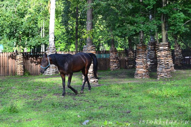 лошадь_loshad'