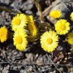 первые_цветы_pervye_tsvety