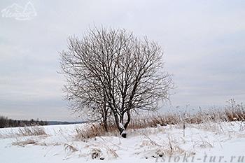 дерево_derevo