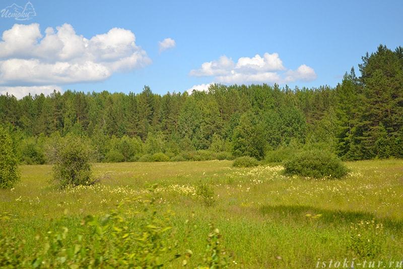 лесные_поляны_lesnye_poljany