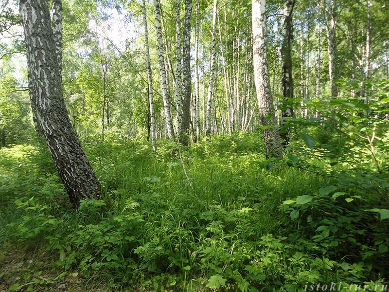 лес_les