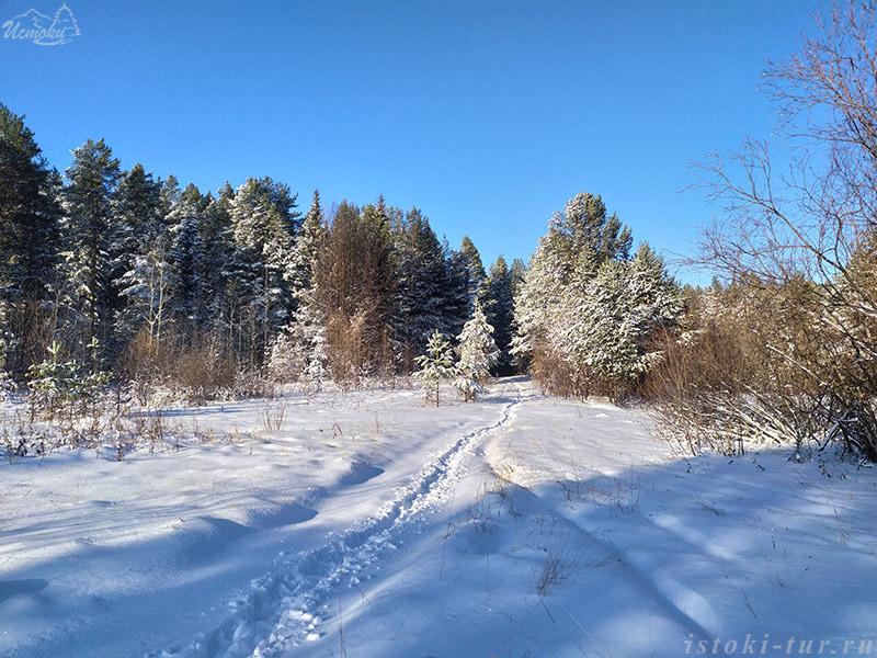 снежный_лес_snezhnyj_les