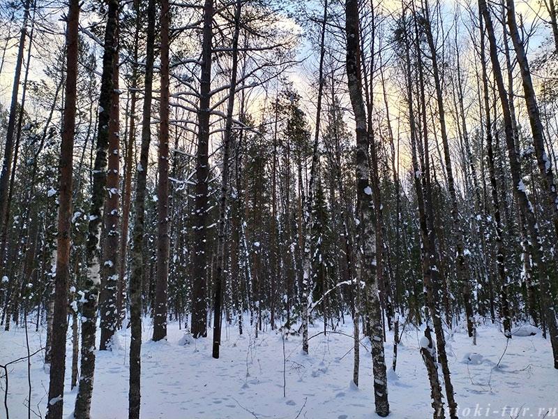 зима_в_лесу_zima_v_lesu