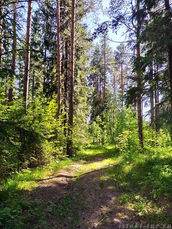 июньский_лес_ijunskij_les