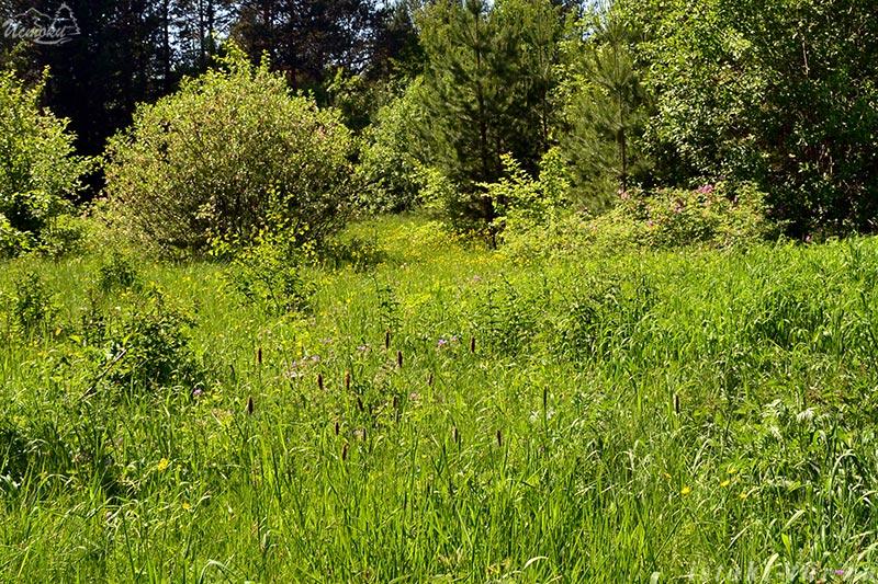 лесные_цветы_lesnye-cvety