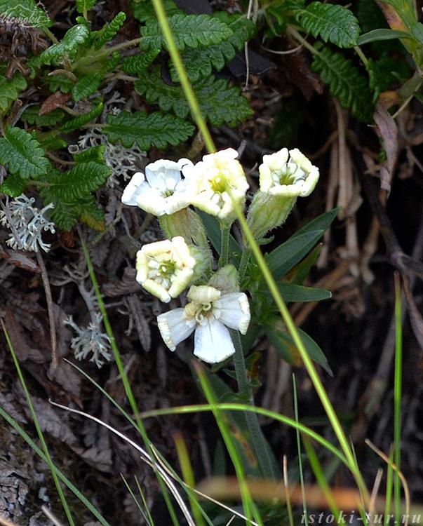 белые_цветки_belye-cvetki