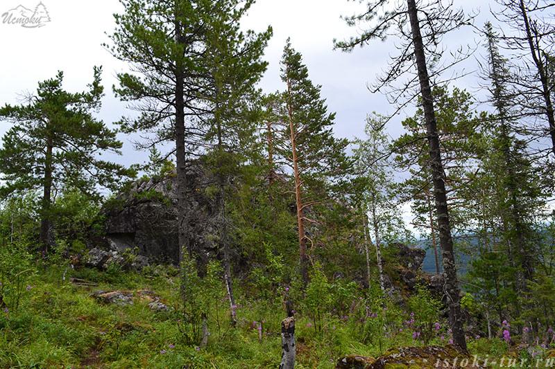 скала_в_лесу_skala-v-lesu