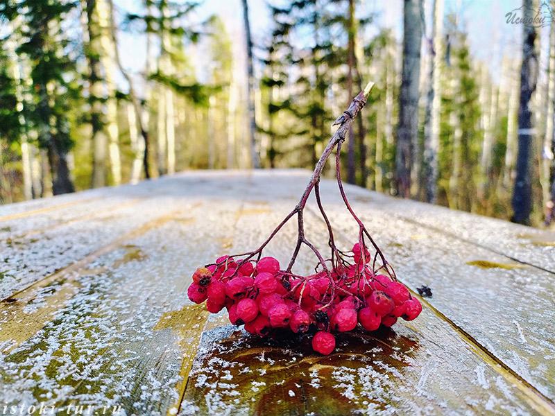 гроздь_рябины_grozd-rjabiny
