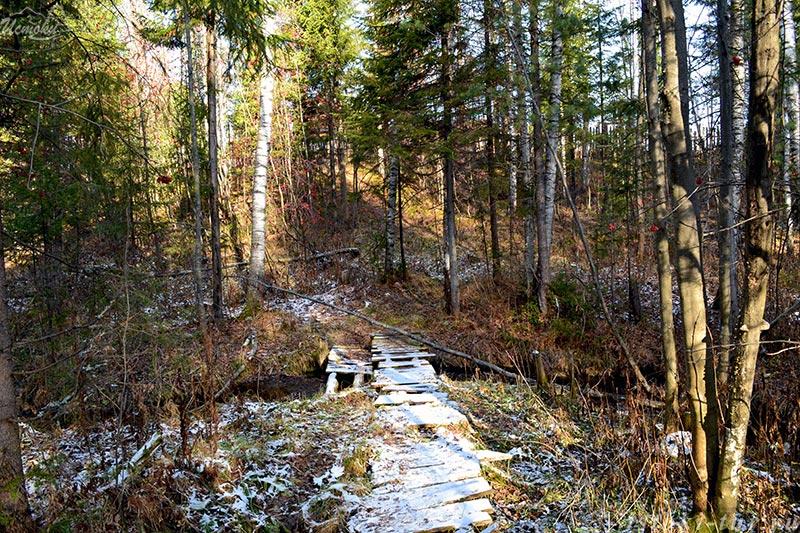 лесной_мостик_lesnoj-mostik