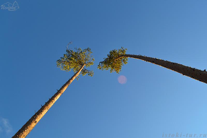 уральские_пальмы_uralskie-palmy