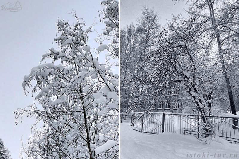 деревья_derevja
