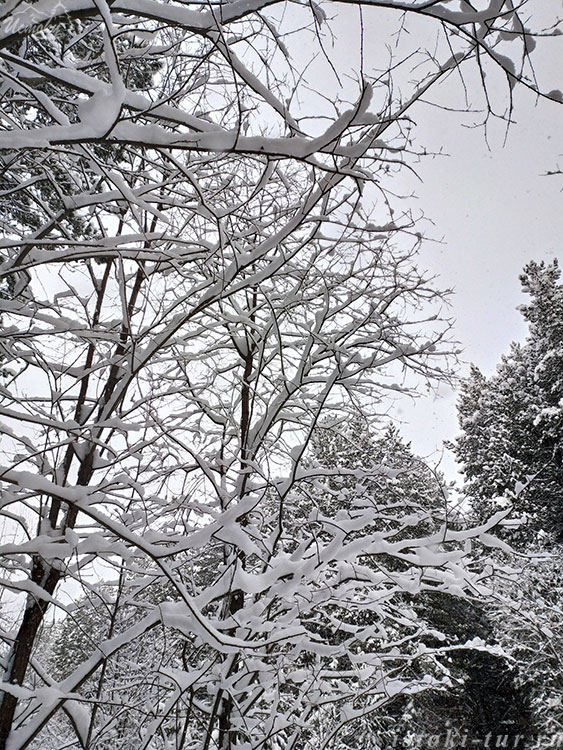 снежное_убранство_snezhnoe-ubranstvo