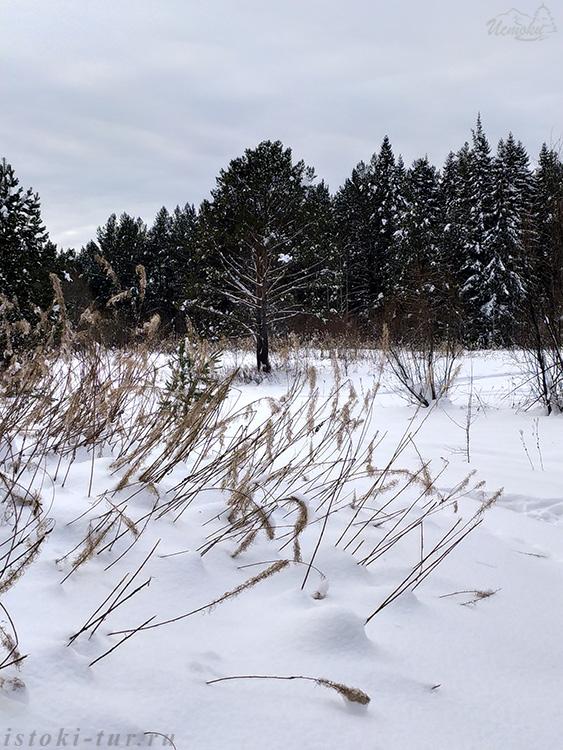 зимние_травы_zimnie-travy